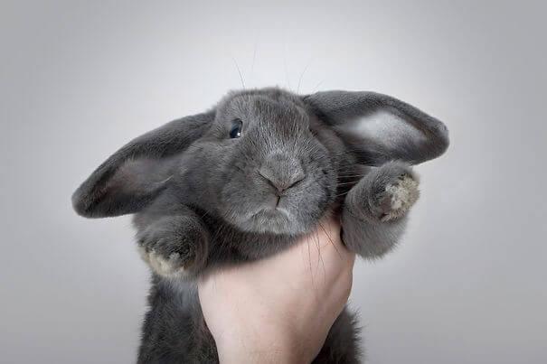 aww bunnies 38