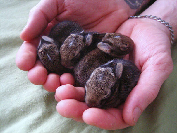 cute rabbits 4