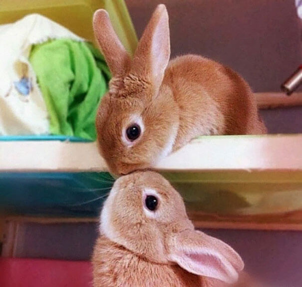 cute rabbits 6