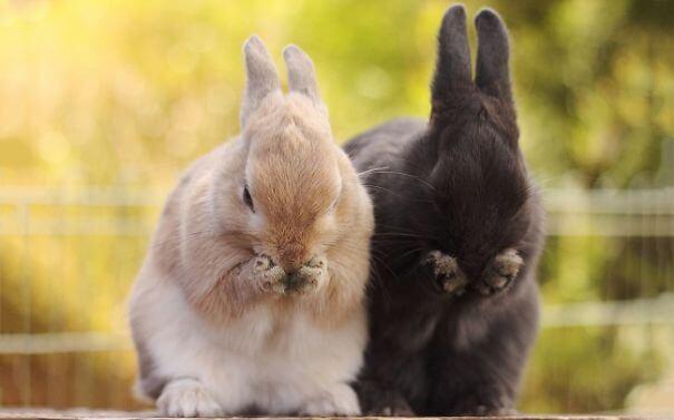 bunnies 61