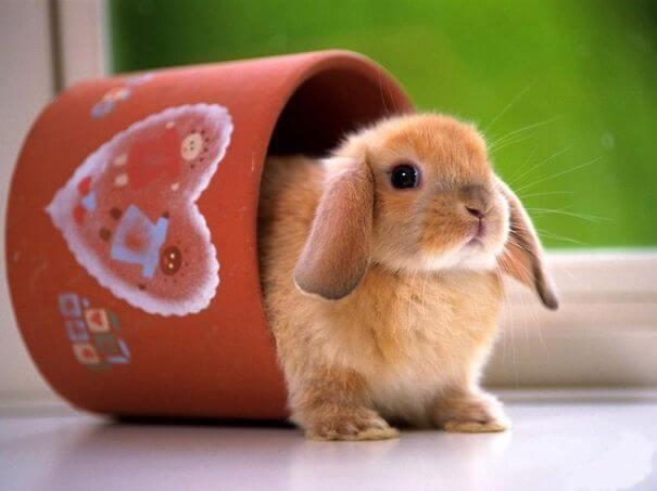 bunnies 62