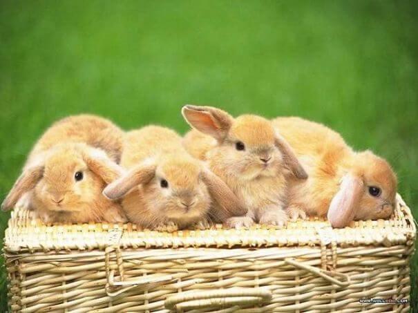 bunnies 63