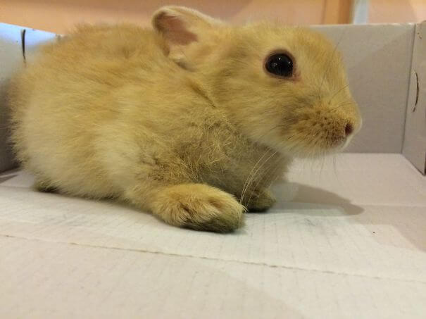 bunnies 65