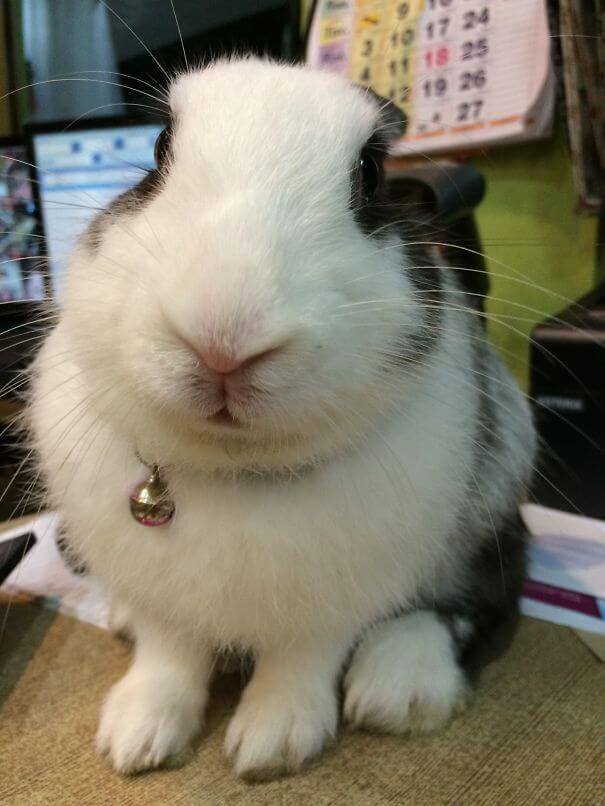 bunnies 66