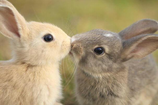 bunnies 67
