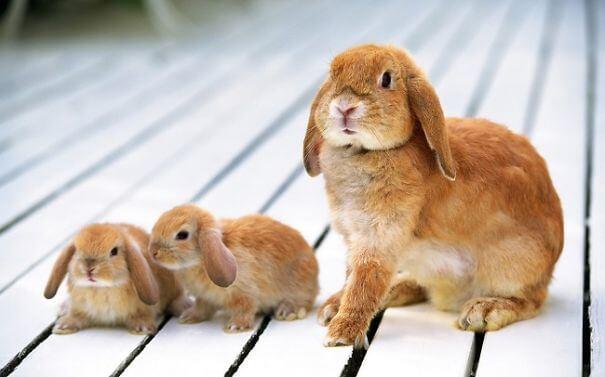 bunnies 68