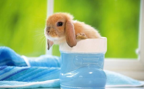 cute rabbit 69