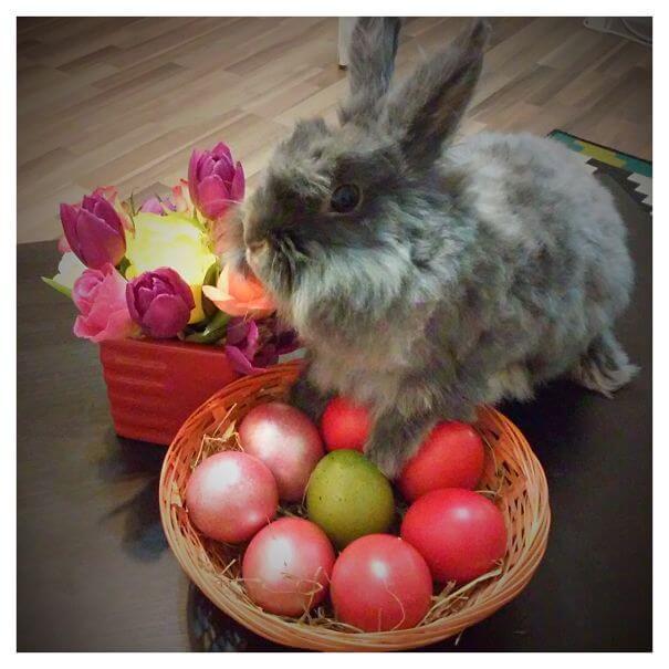 cute bunnies 72