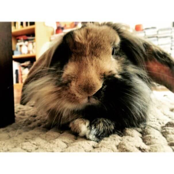 cute bunnies 74
