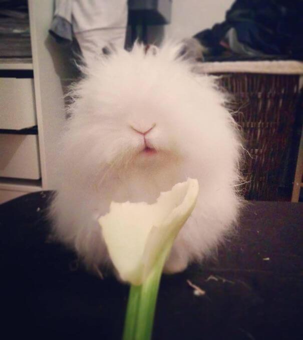 cute bunnies 75