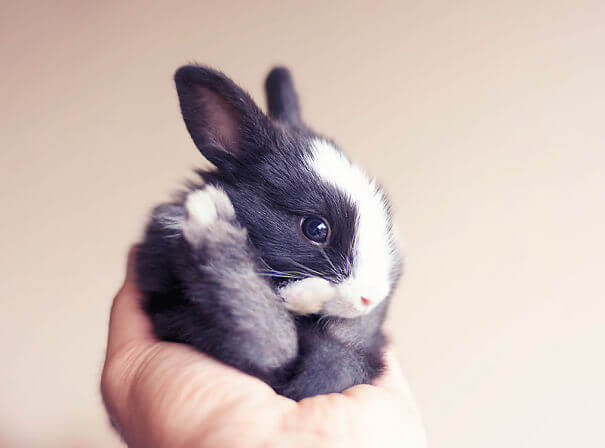 cute rabbits 8