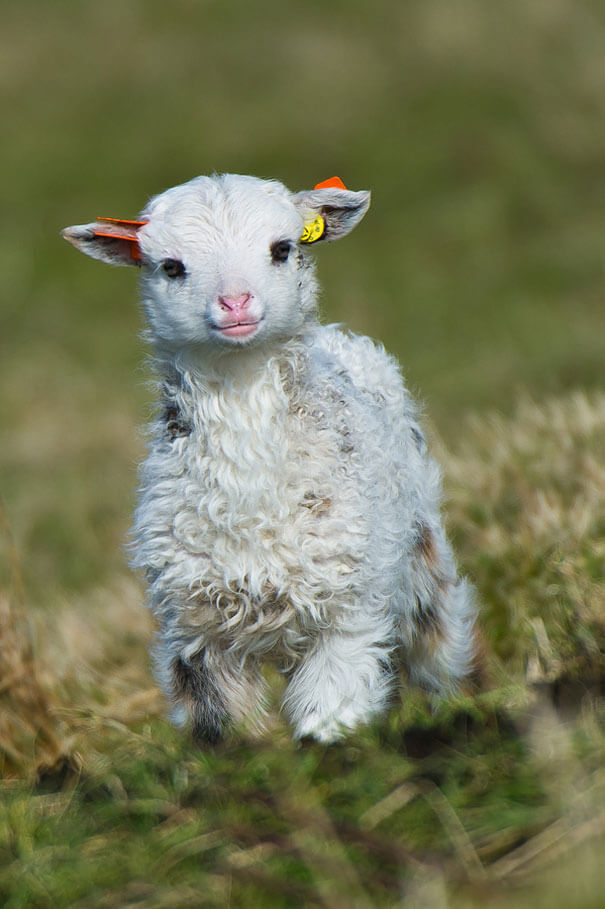 adorable animals ever 14