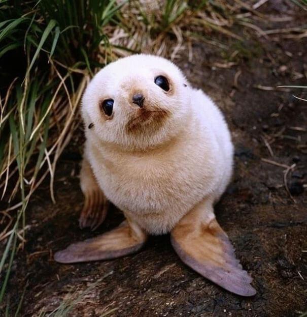 cutest baby animals 17