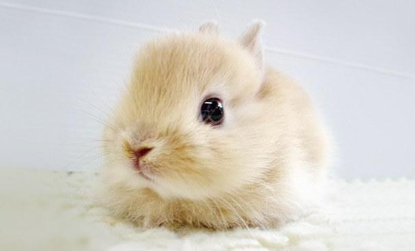 cutest baby animals 19