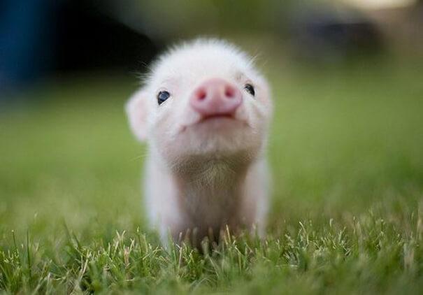 cutest baby animals 20