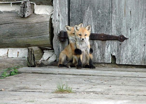 cutest baby animals 21
