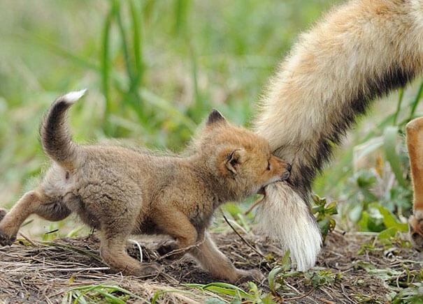 cutest baby animals 24