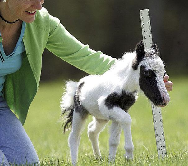 cutest baby animals 25