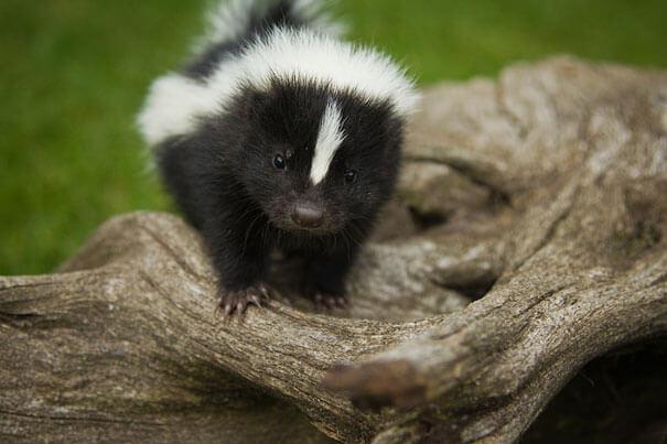 cutest baby animals ever 26