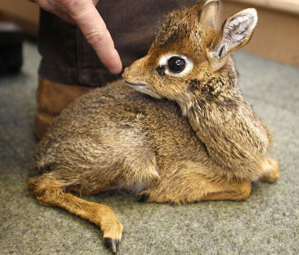 cutest baby animals ever 29