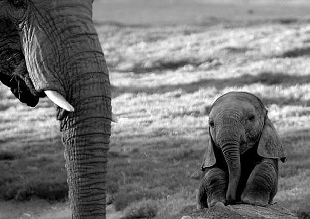 cutest animals ever 3