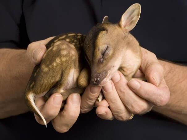 cutest animals 6