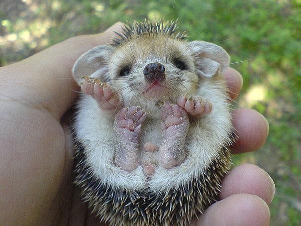 cutest animals 8