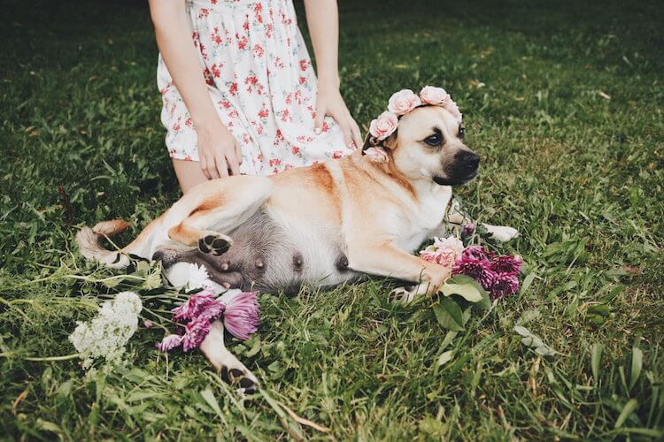 dog maternity shoot 2