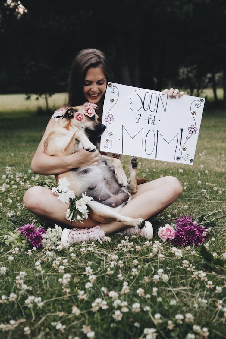 dog maternity shoot 3