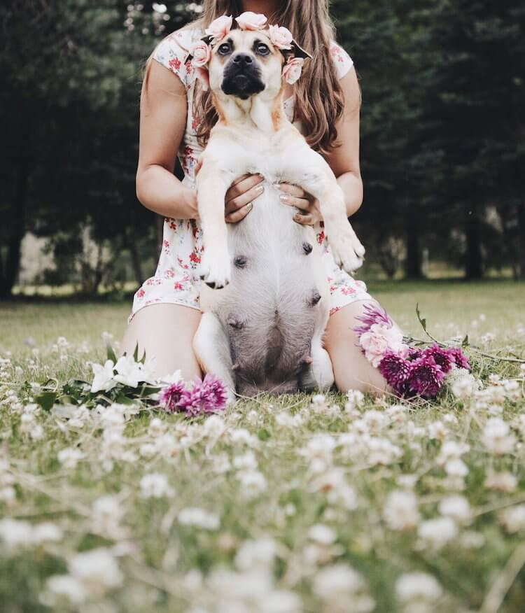 dog maternity shoot 4