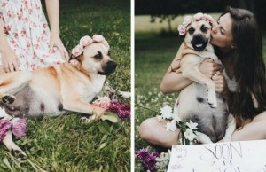 dog maternity shoot feat (1)