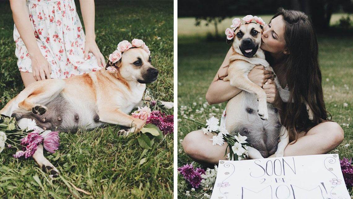 dog maternity shoot