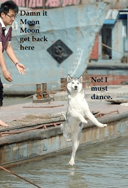 the most retarded wolf 5