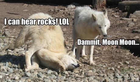 the most retarded wolf 6