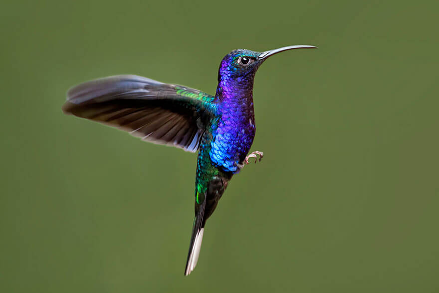 images of hummingbirds 11