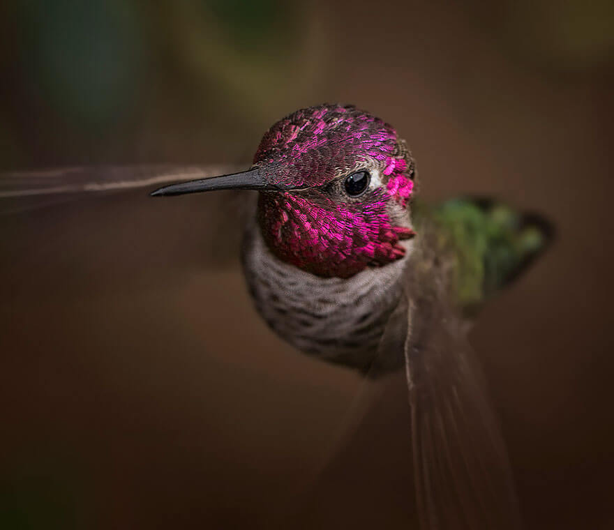 images of hummingbirds 12