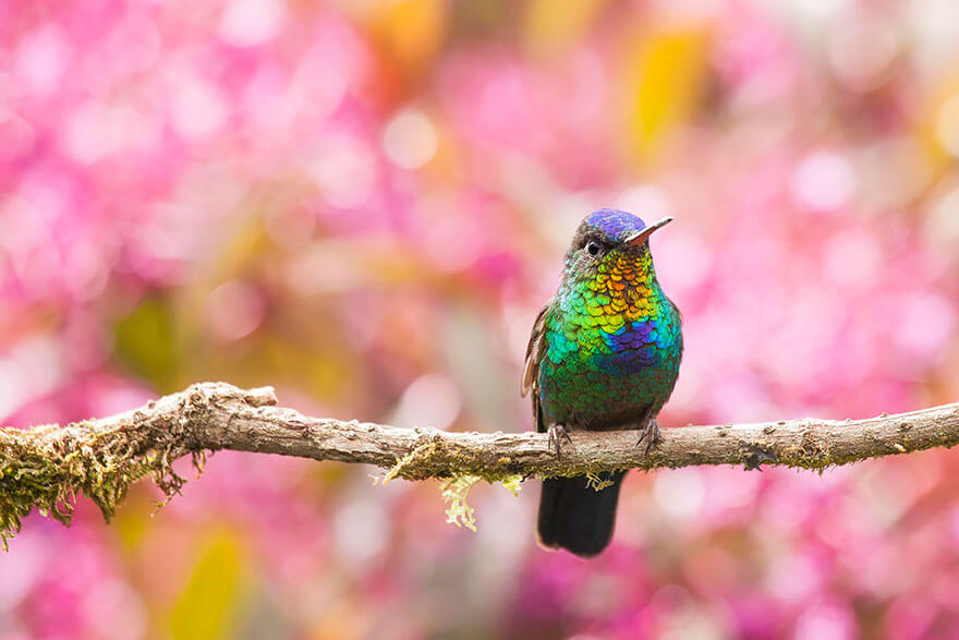 photos of hummingbirds 15