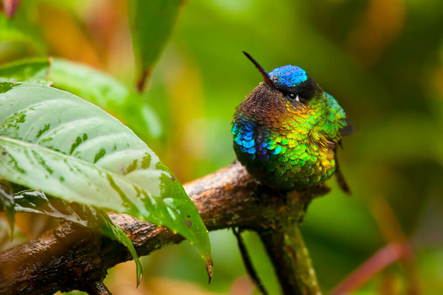 photos of hummingbirds 16