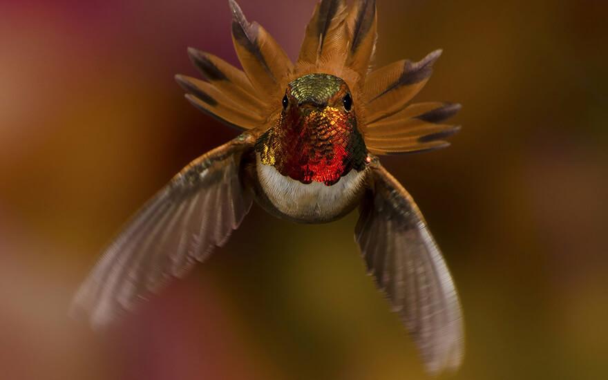 photos of hummingbirds 18