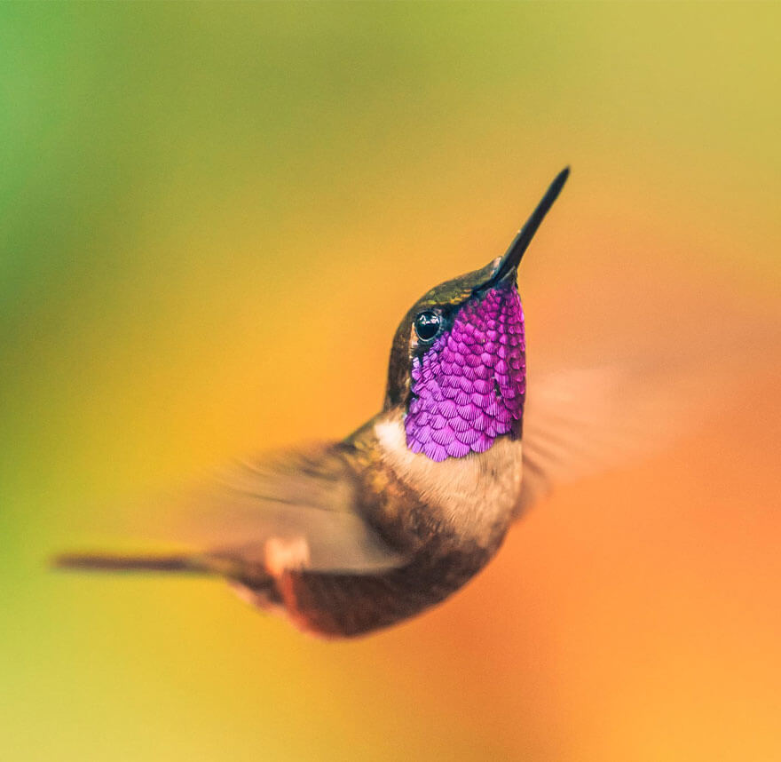 photos of hummingbirds 19