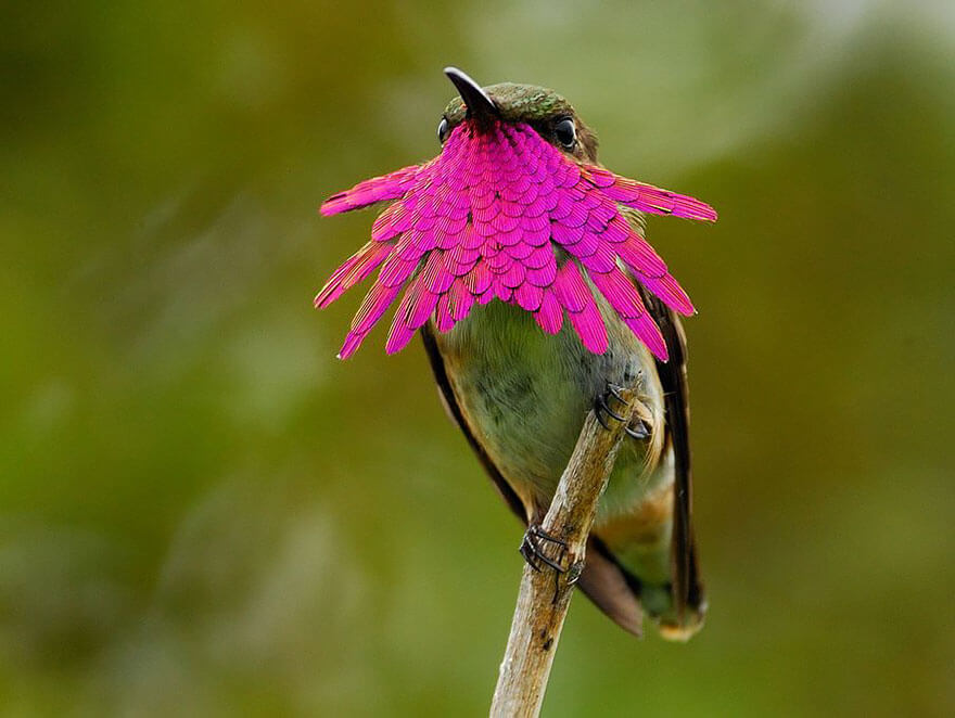 pictures of hummingbirds 2