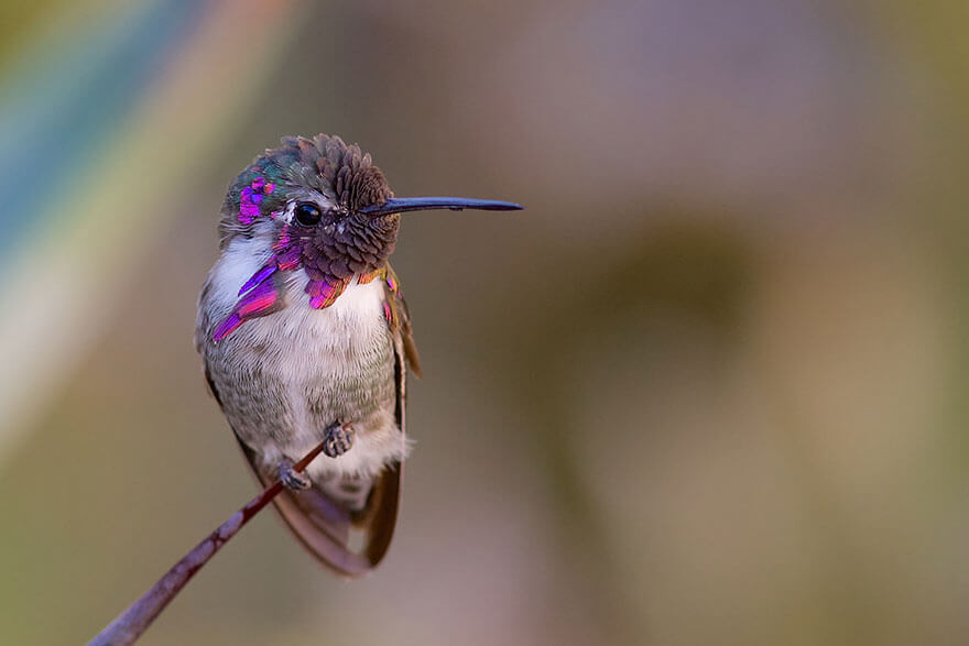 images of hummingbirds 4