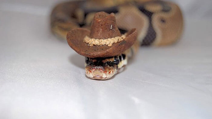 snakes in hats 10 (1)