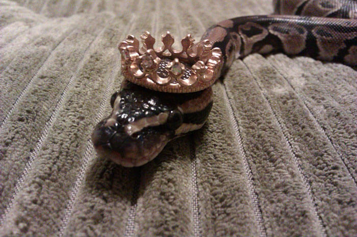 snakes in hats 11 (1)