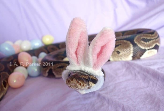 snakes wearing hats 15 (1)