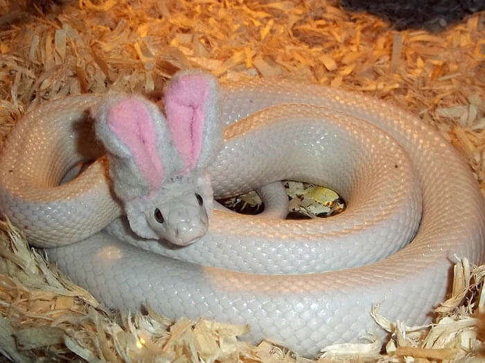 snakes wearing hats 24 (1)