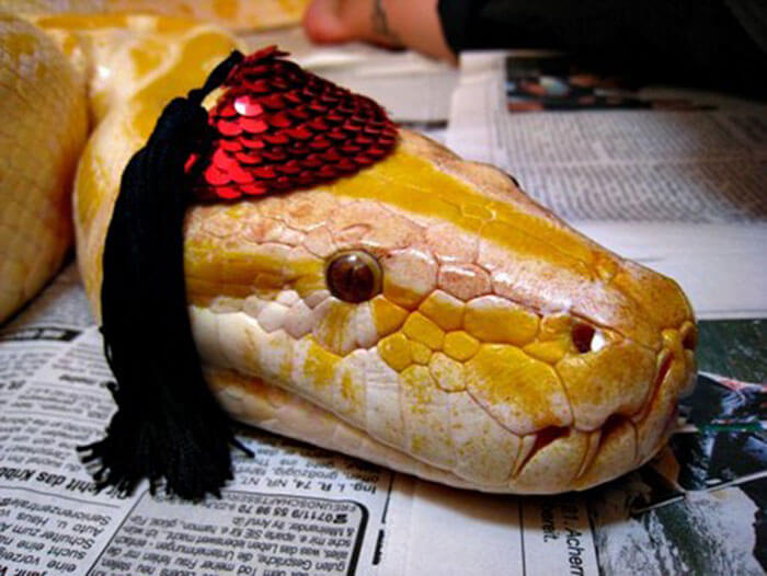 snakes and hats 25 (1)