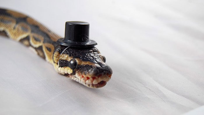 snakes and hats 26 (1)
