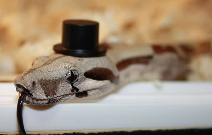 snakes and hats 28 (1)