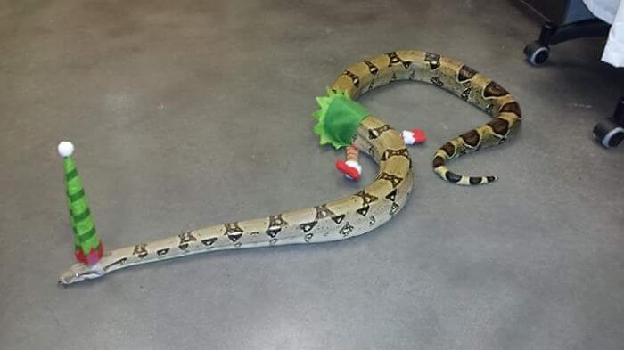 snakes and hats 29 (1)